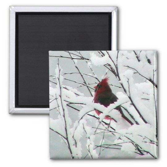 A Beautiful Red Cardinal In The Bushes Covered Wit Square Magnet