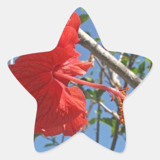 A beautiful red Hibiscus flower Star Sticker
