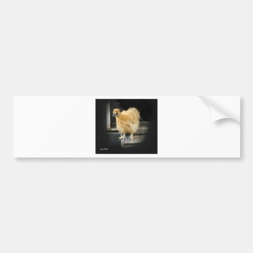 a beautiful Silkie Bantam Chicken picture. Bumper Stickers