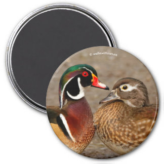 A Beautiful Touching Moment Between Wood Ducks Magnet