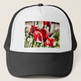A beautiful Tulip Trucker Hat