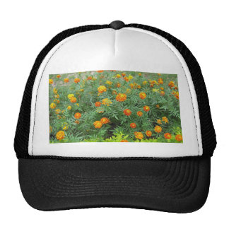 A bed of beautiful yellow and orange marigolds hats