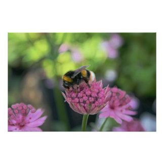 A Bee on a Flower Print