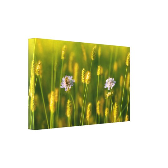 A bee on the Spring wild flowers Canvas