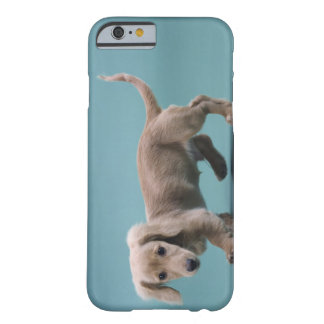 A beige small dachshund walking barely there iPhone 6 case
