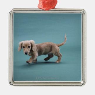 A beige small dachshund walking christmas ornament
