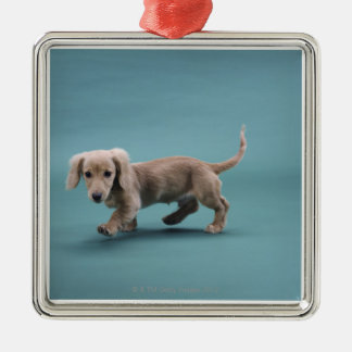 A beige small dachshund walking Silver-Colored square decoration