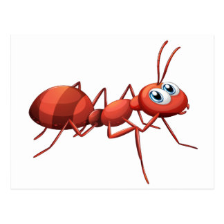 A big red ant post card