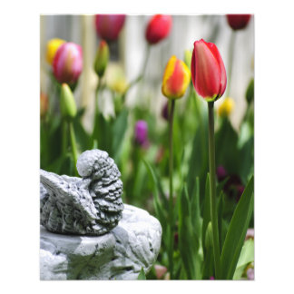 A Bird And A Tulip Flyers