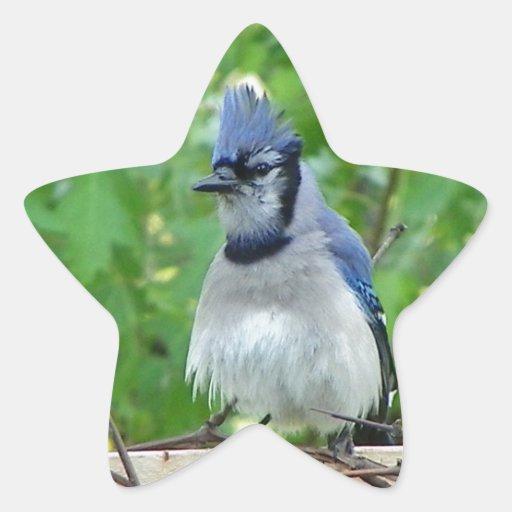 A birds eye day star sticker