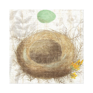 A Bird's Nest with a Green Egg Stretched Canvas Prints