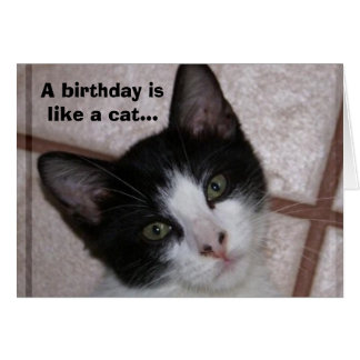 A birthday is like a cat... greeting card