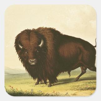 A Bison, c.1832 Square Sticker