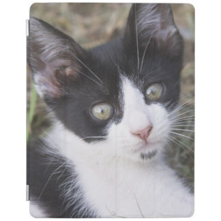 A black and white cat kitten in the garden. iPad cover