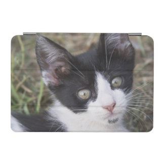 A black and white cat kitten in the garden. iPad mini cover