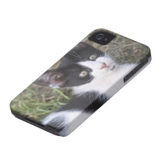 A black and white cat kitten in the garden. iPhone 4 Case-Mate case