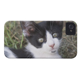 A black and white cat kitten in the garden. iPhone 4 Case-Mate cases