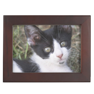 A black and white cat kitten in the garden. keepsake box
