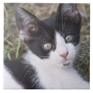 A black and white cat kitten in the garden. large square tile
