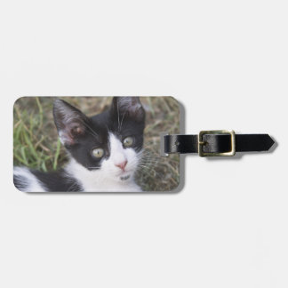 A black and white cat kitten in the garden. luggage tag