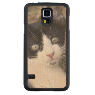 A black and white cat kitten in the garden. maple galaxy s5 slim case