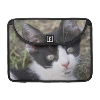 A black and white cat kitten in the garden. sleeve for MacBook pro