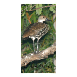 A Black-billed Whistling Duck Perched In A Tree Personalized Photo Card