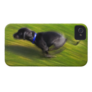 A black dog running Case-Mate iPhone 4 case