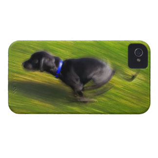A black dog running iPhone 4 Case-Mate cases