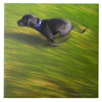 A black dog running tile