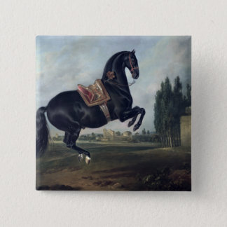 A black horse performing the Courbette 15 Cm Square Badge