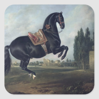 A black horse performing the Courbette Square Sticker