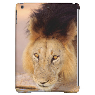 A Black Maned Lion at a waterhole iPad Air Cover
