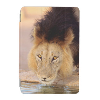A Black Maned Lion at a waterhole iPad Mini Cover