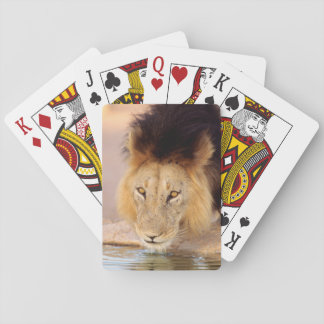 A Black Maned Lion at a waterhole Playing Cards