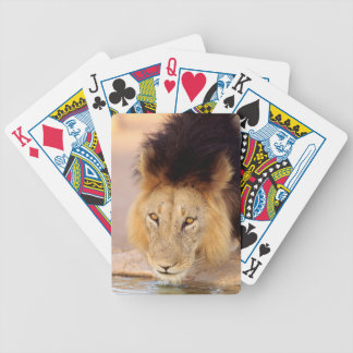 A Black Maned Lion at a waterhole Poker Deck
