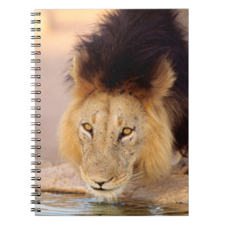 A Black Maned Lion at a waterhole Spiral Notebook