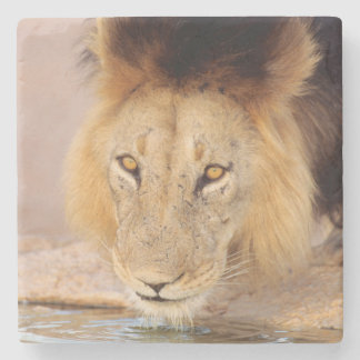 A Black Maned Lion at a waterhole Stone Coaster