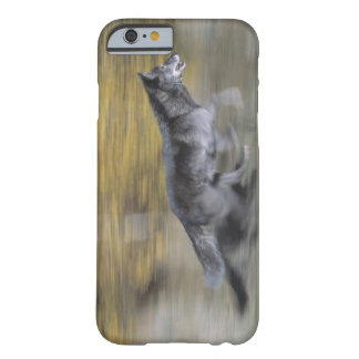A black wolf on the run barely there iPhone 6 case
