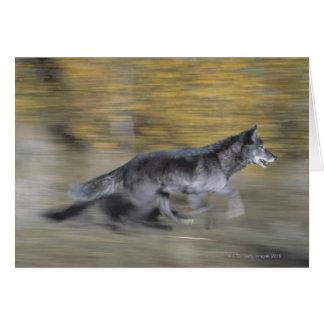 A black wolf on the run card