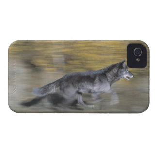 A black wolf on the run iPhone 4 covers