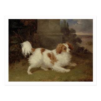A Blenheim Spaniel, c.1820-30 (oil on canvas) Postcard