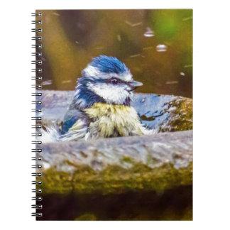 A Blue Tit in the Birdbath Notebooks