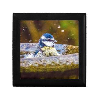 A Blue Tit in the Birdbath Small Square Gift Box