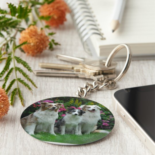 a border collie, Bluem alder, and two Australia Basic Round Button Key Ring