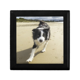 A Border Collie Dog Running On The Beach Small Square Gift Box