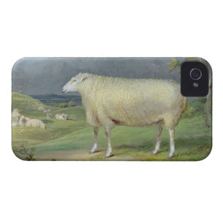 A Border Leicester Ewe (oil on canvas) iPhone 4 Case-Mate Case