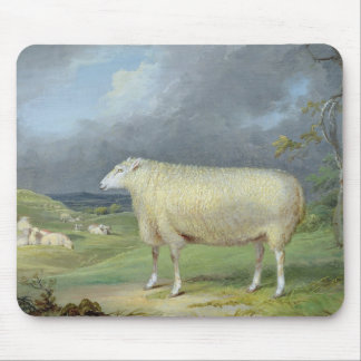 A Border Leicester Ewe (oil on canvas) Mouse Mat