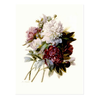 A Bouquet Of Peonies by Pierre-Joseph Redouté Postcard
