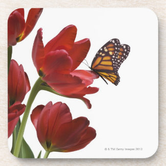 a bouquet of red tulips is visited by a monarch beverage coasters